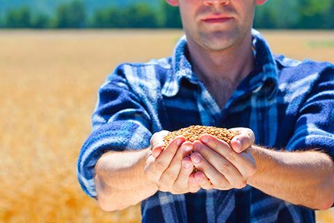 Chicago en suba por desmejoramiento condición cultivos EEUU.