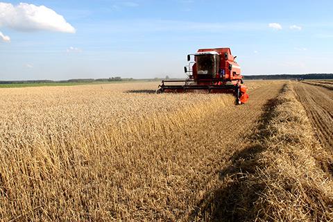 Bajas generalizadas en el mercado de granos